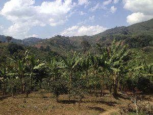 Tanzania coffee farm