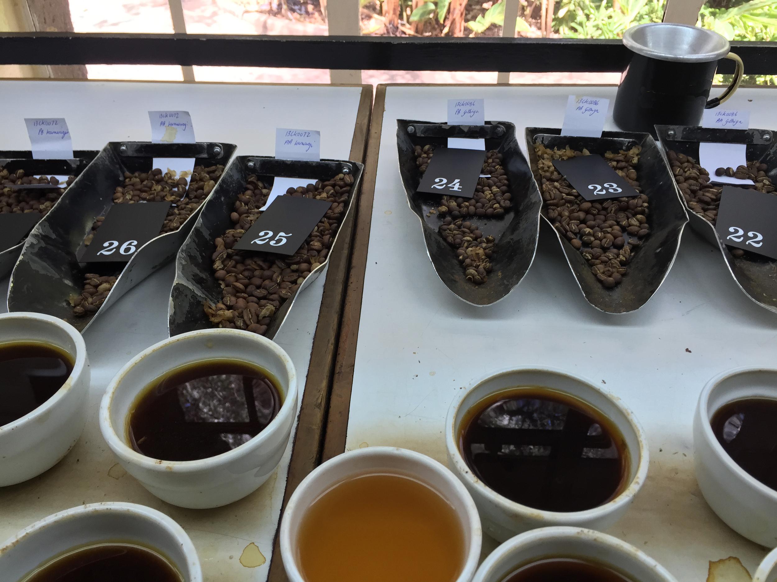 coffee samples Ethiopia
