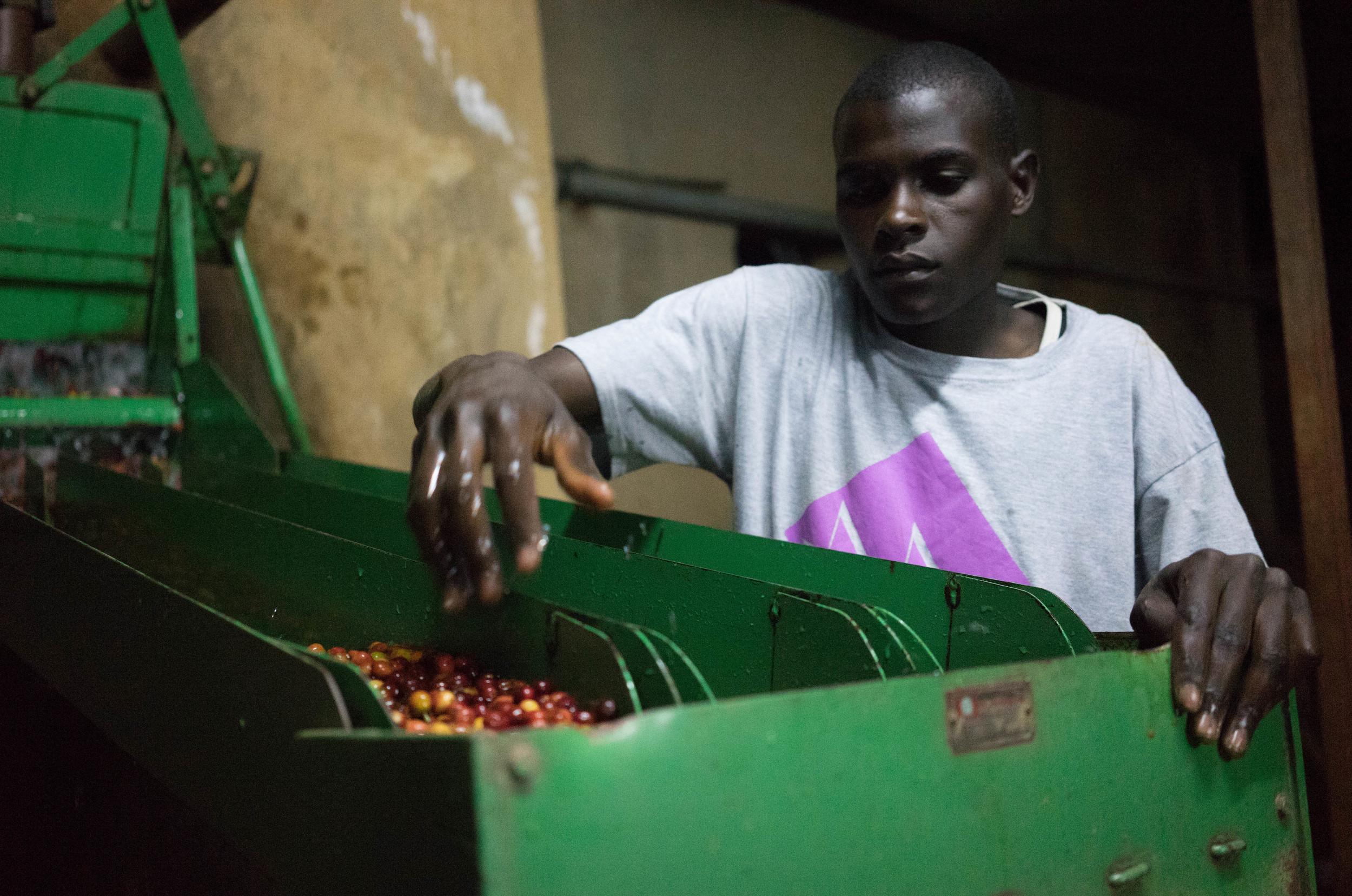 depulping coffee, Ethiopia