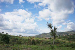 coffee farm Rwanda