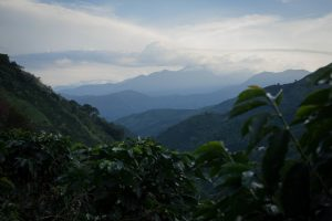Colombia hills covered in coffee plants