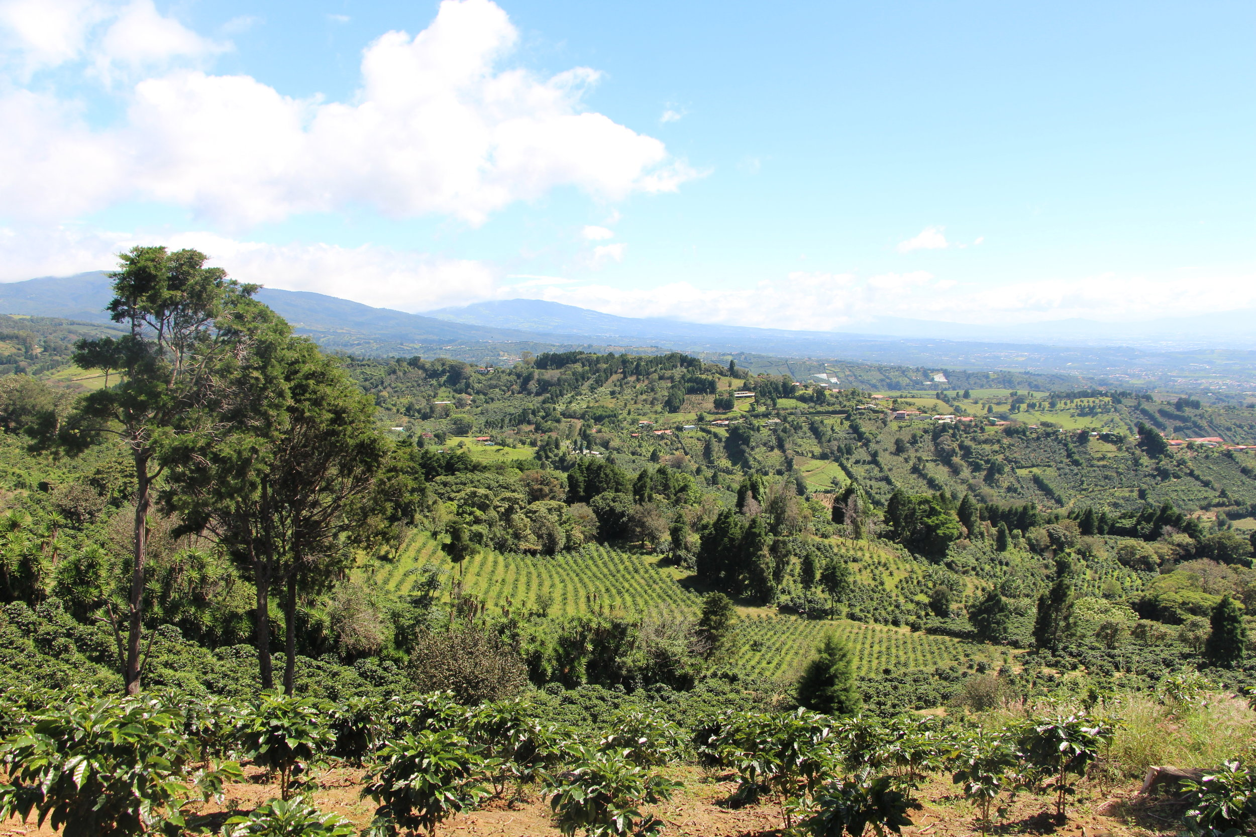 Costa Rica coffee landscape