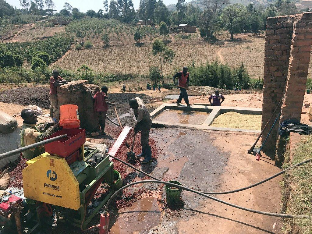 eco-pulper Ilomba Tanzania