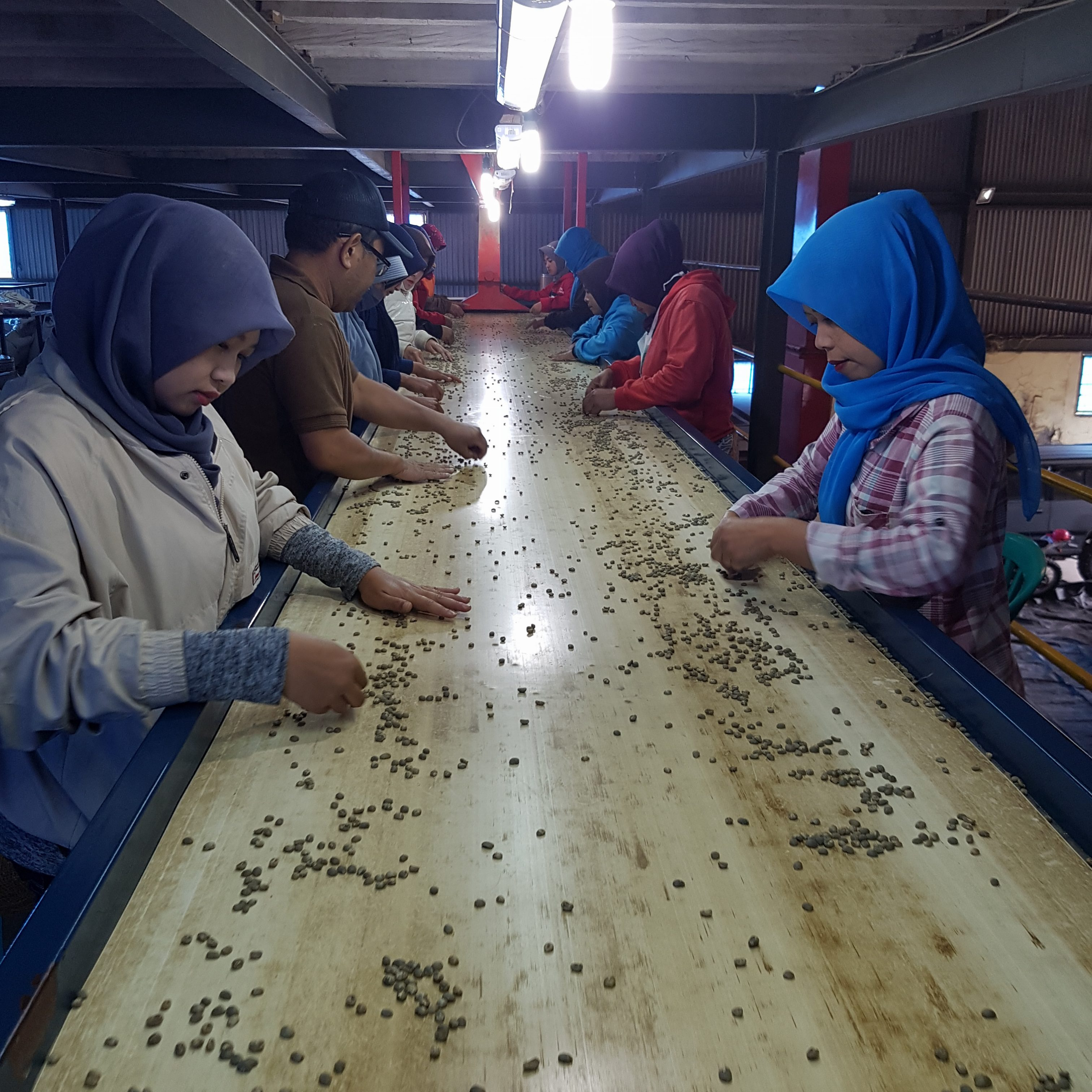 hand sorting coffee